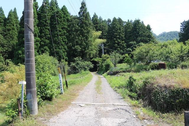 東洞線の林道入り口
